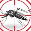 Zika en el país: 44.000 mujeres en edad fértil podrían contraer el virus
