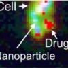 Cuantifican el sistema de nanoliberación de fármacos en las células