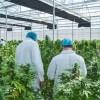 A un año de la Ley, primer avance del Gobierno para que el Estado cultive cannabis con fines médicos
