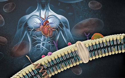 Aporte de la ciencia al tratamiento de la hipertensión..